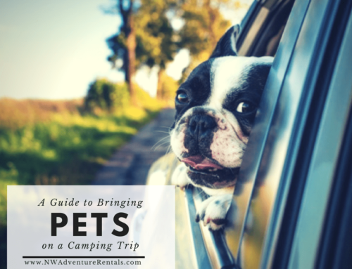 Tips for Bringing Your Pet on a Camping Trip